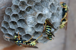 bee & wasp removal beaverton or