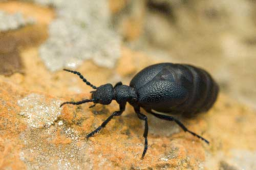 TEXTILE PESTS AND TERMITES